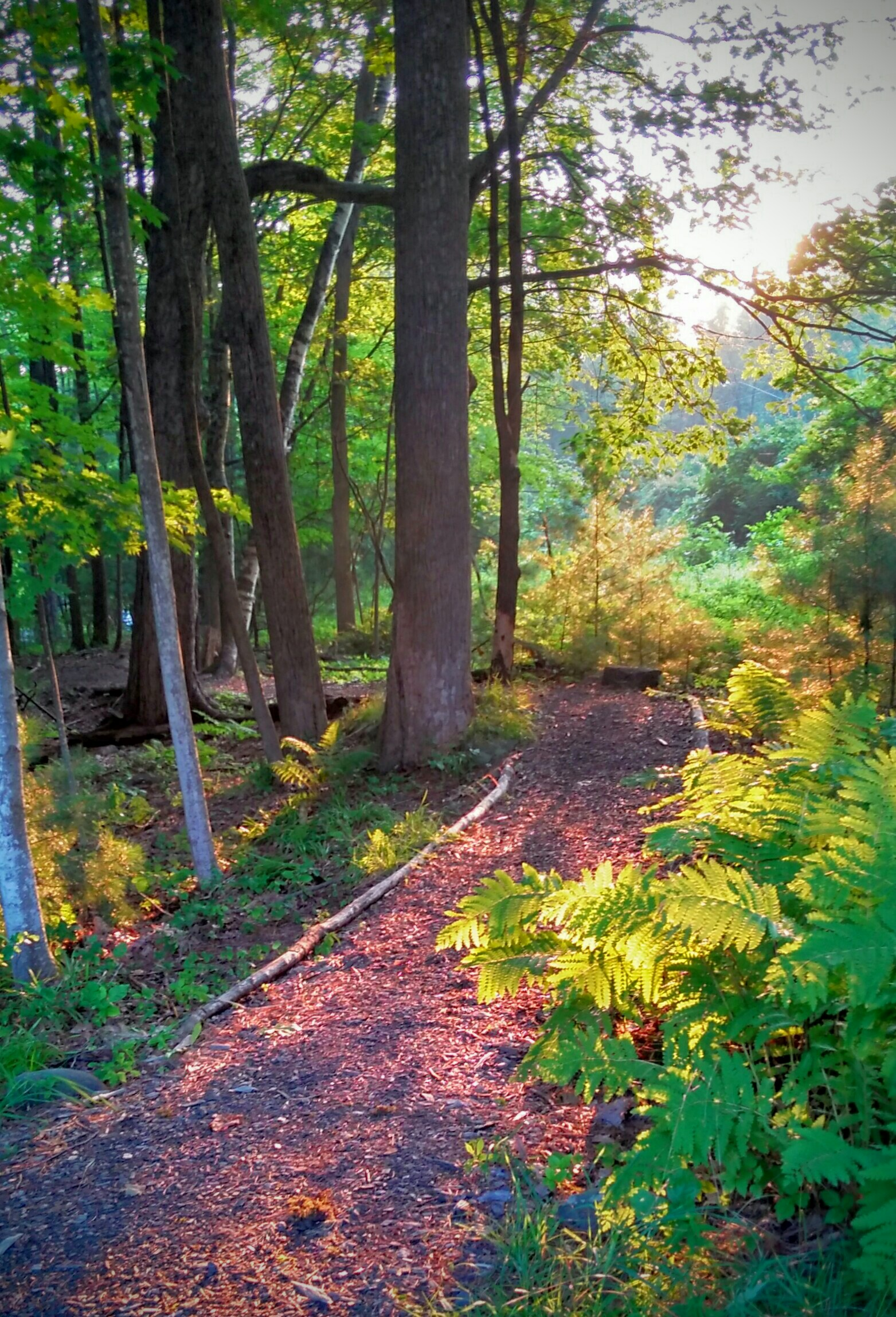Music and Nature at Montgomery Place&nbsp;<br />&nbsp;