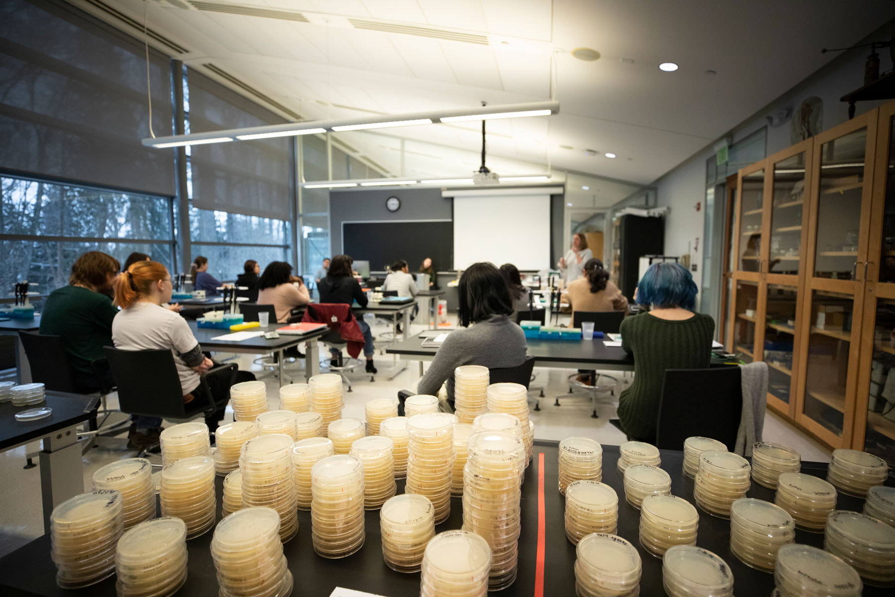 Bard College first-year students collected, plated, and mapped freshwater samples from around the world as part of the 2019 Citizen Science Program. Photo by Pete Mauney '93 MFA '00.