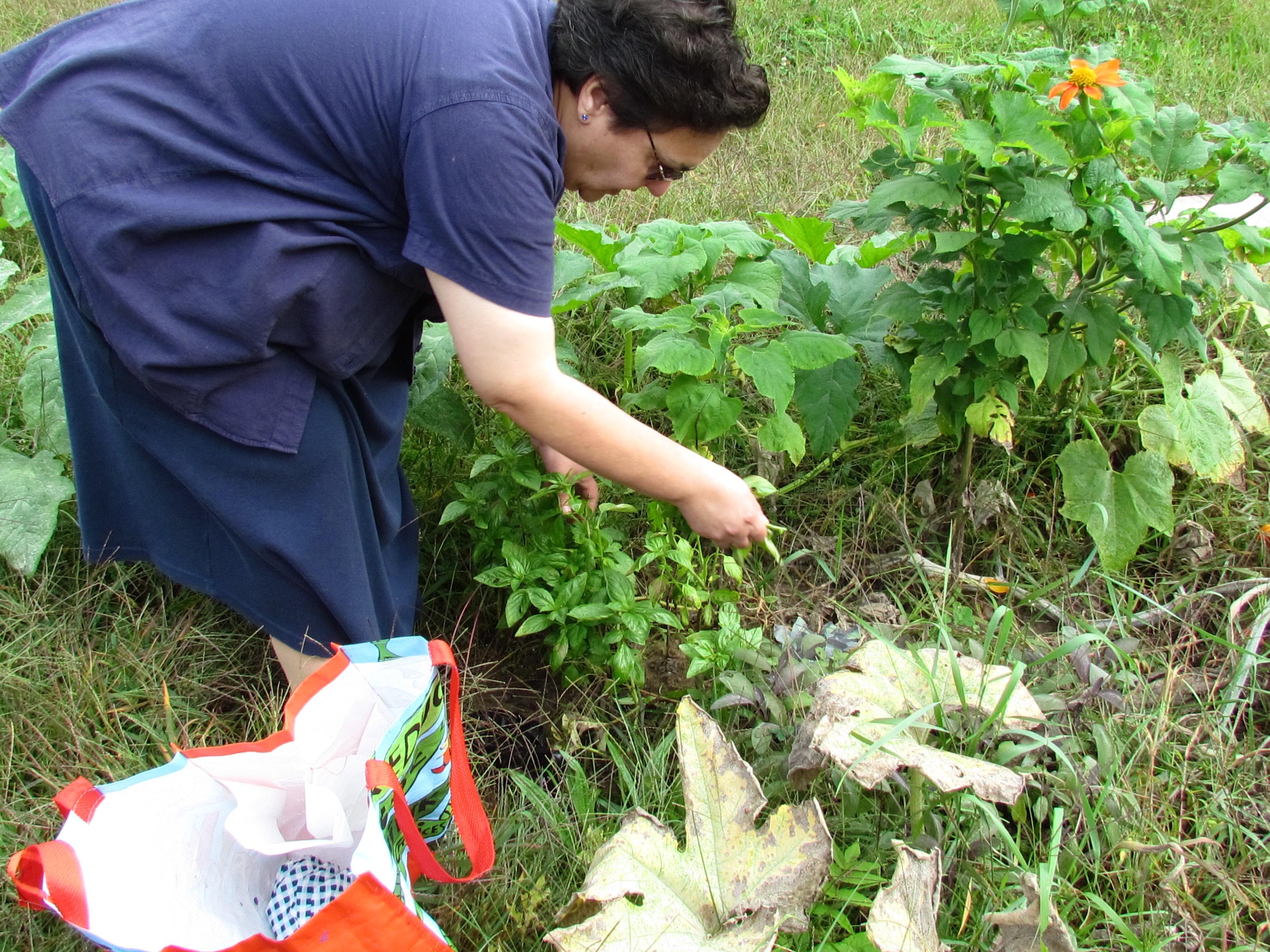 Maria Lazo cuida la huerta del rondout en Kingston. Foto de Lynn Woods