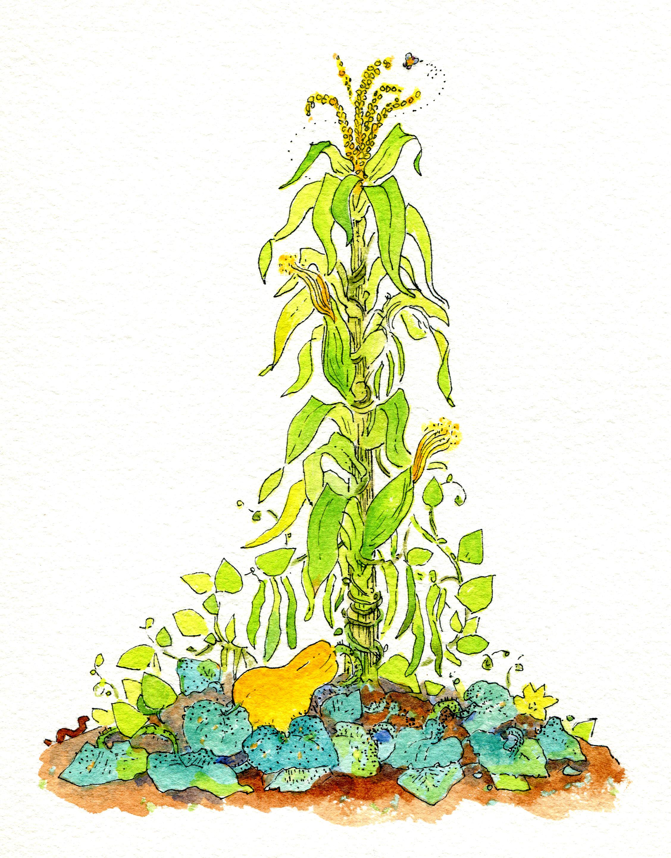 Encuentra en la huerta de las tres hermanasa dos animalitos que la ayudan a crecer. Ilustración de Cristina Brusca